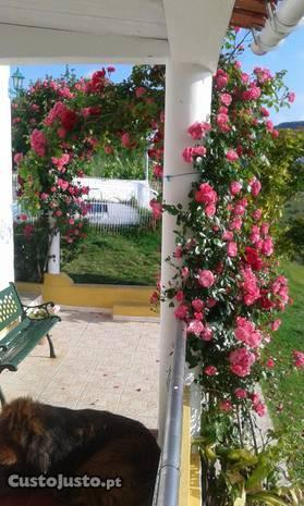 Quinta piscina jardim furo churrasqueira