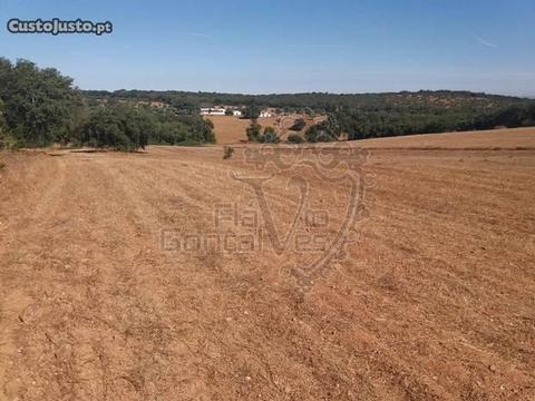 Terreno rústico de terra limpa com sobreiros
