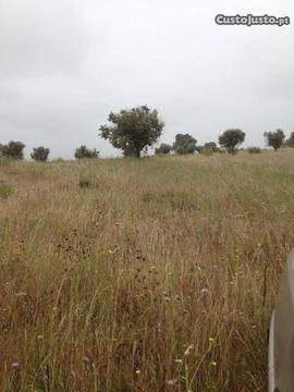 Terreno, 24 ha, Ruina, St. Cacem, Alentejo